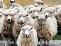 Prêtres et laïcs peuvent-ils évangéliser séparément sans que l'un accompagne l'autre?