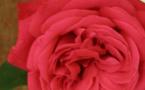 Toussaint : la mort n'est pas le trou mais tout l'inverse, la lumière et la certitude de l'amour vainqueur
